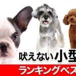 吠えない小型犬ランキングベスト10