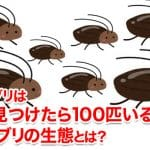 ゴキブリは1匹見つけたら100匹いるの?ゴキブリの生態とは?