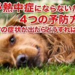 犬が熱中症にならないための4つの予防方法!熱中症の症状が出たらどうすればいい?
