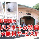 円山動物園の年間パスポート7つの特典!割引や無料サービスがある!